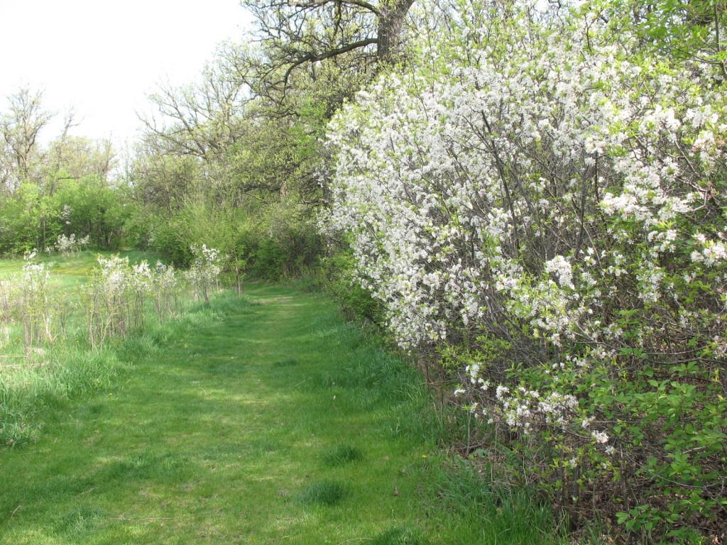 springflowers2011 013