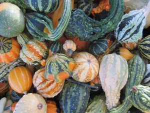 Wonderful World of Winter Squash @ Charleswood 55+ Active Living Centre