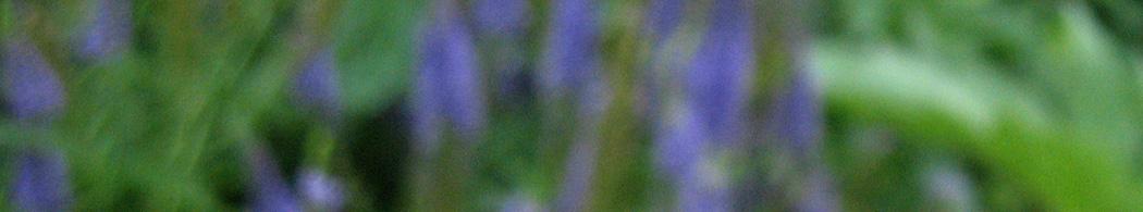 Ask an MG – Manitoba Master Gardener Association