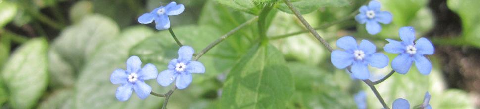 Manitoba Master Gardener Association