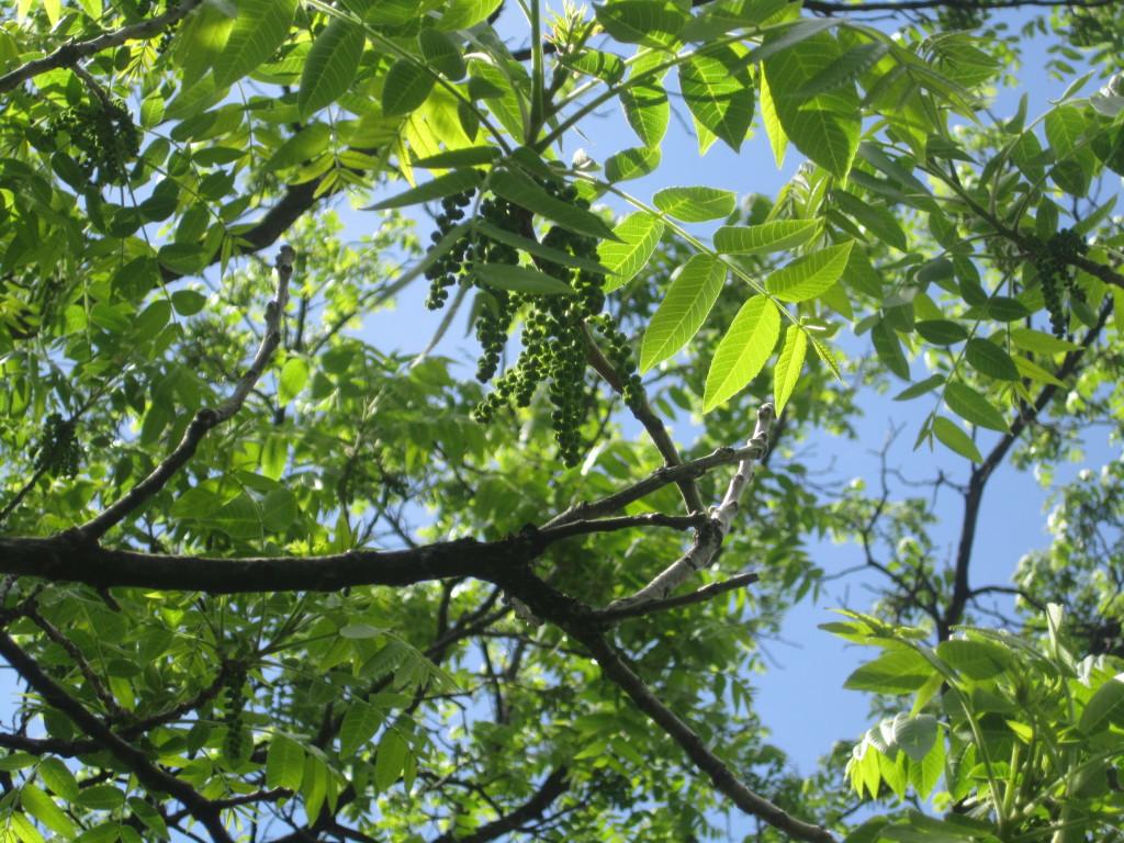 trees 086