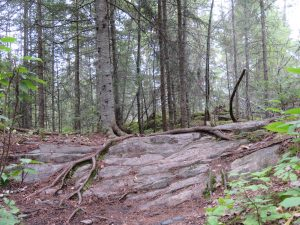 Forest Bathing @ Millennium Library